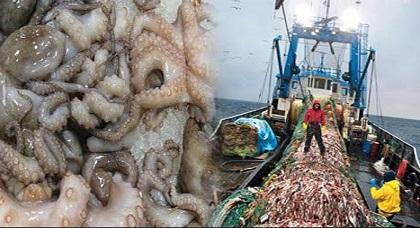 الدريوش.. جمعية أفراس بأولاد أمغار تستنكر انتهاكات أحد تجار السمك بسبب الأخطبوط وتطالب بفتح تحقيق