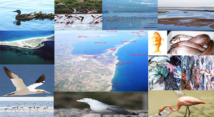 التنوع البيولوجي في بحيرة مارتشيكا في خدمة  السياحة البيئية