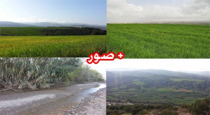 مرتفعات  تمسمان تكتسي حلة خضراء تغـري الزائرين برحلات النزهة والتخييم