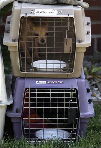 عاش لسنوات عديدة مع 104 كلاب