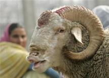أمريكا: مسلم يواجه تهمة ذبح خروف