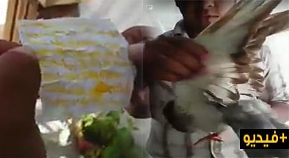 """مواطن يعثر على """"طلاسم"""" سحر وشعوذة داخل جناحي طائر وسط مدينة الدريوش"""