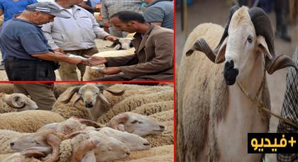 """قبيل أيام من """"العيد الكبير"""".. عرض الأضاحي يفوق الطلب في السوق الأسبوعي للدريوش"""