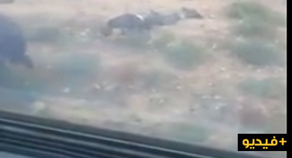 العثور على شاب متوفي قرب السكة الحديدية