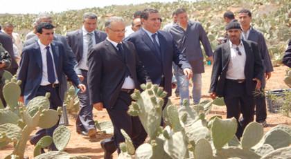 وزارة اخنوش تشيد وحدات لتثمين الصبار بالحسيمة