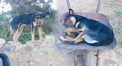 بالصور.. كلاب مسعورة تسيل الدم من أفواهها تهاجم مواطنين بآيت سعيد