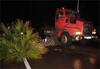 شجرة النخيل ضحية فقدان سائق شاحنة السيطرة على المقود بطريق بني انصار