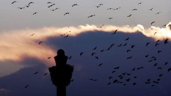 بعد حادث الطائرة المغربية (روبن لايت) نظام جديد لرادار يكشف الطيور