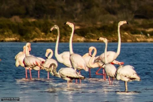 أجمل ما في الناظور.. إكتشفوا مناظر رائعة لمناطق متفرقة حول بحيرة مارتشيكا