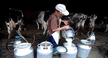 تعاونيات فلاحية تعتزم توزيع الحليب بالمجان دعما لحملة المقاطعة