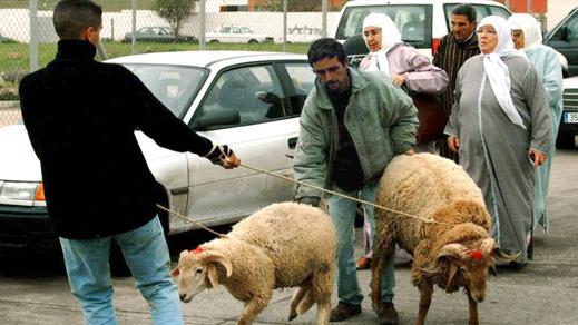 اسبانيا تخصص معبر بني انصار لمرور الأكباش المغربية إلى مليلية بمناسبة عيد الأضحى