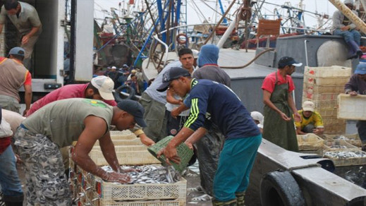 أثمنة أسماك السردين تتراجع الى أدنى مستويات لها منذ سنوات بمختلف أسواق الريف