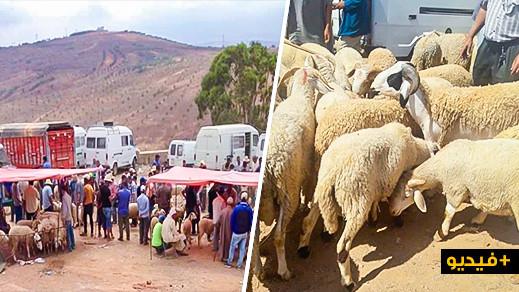 ربورتاج: أضاحي العيد بسوق خميس تمسمان.. العرض موجود والغلاء فاحش