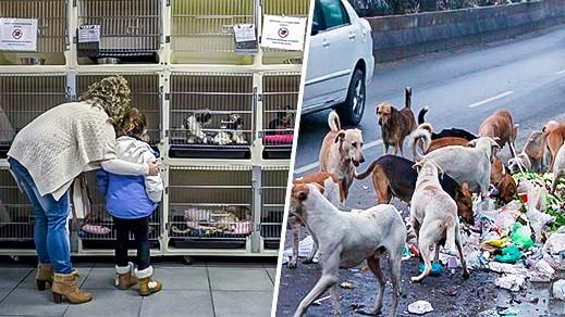 """جمعية """"أمم"""" لحماية الحيوان تشيد بمناقشة موضوع قتل الكلاب بدورة المجلس البلدي بالناظور"""