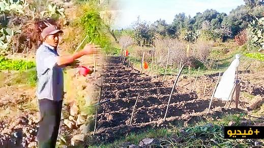 الدريوش.. انتشار الخنزير البري بجماعة أتروكوت وإتلافه المحاصيل الزراعية يدفع الفلاحين إلى الاستغاثة