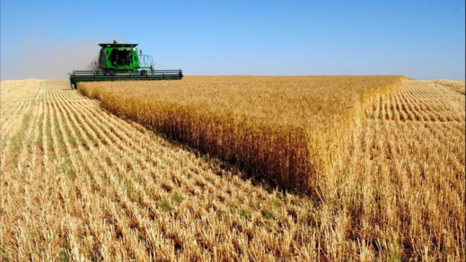 المغرب يستورد حوالي 46 ألف طن من القمح الأوروبي