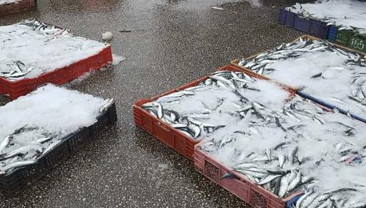 سلطات ميناء الصيد البحري بالحسيمة تمنع شاحنات الأسماك من تفريغ حمولتها
