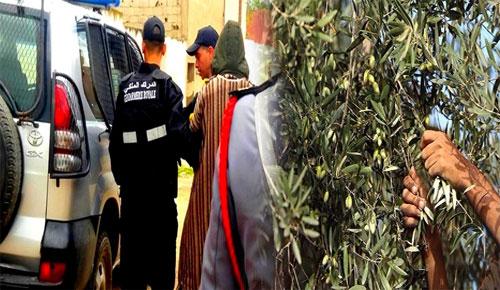 الدريوش.. الدرك الملكي يعتقل شابين متلبسين بسرقة كمية من الزيتون من ضيعة فلاحية