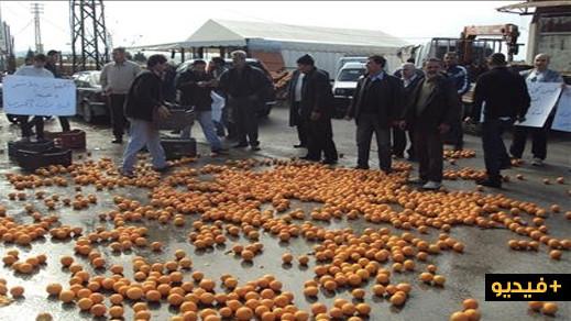 شاهدوا.. مزارعون مغاربة يرمون البرتقال والكليمونتين بسبب تراجع الأسعار