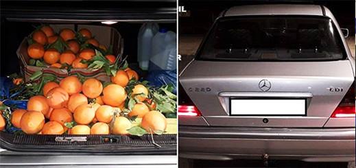 بالصور.. توقيف اسباني حاول تهريب الحشيش وسط البرتقال بمعبر فرخانة