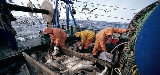 يهم ممتهني الصيد البحري بالناظور.. إجراءات قانونية جديدة لمحاربة الصيد غير القانوني