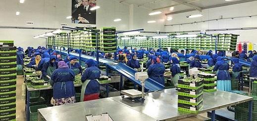 """هذه أسباب تهافت """"الأوربيين"""" على سوق الخضروات المغربي.. وشركات هولاندية تتوقع الازدحام"""