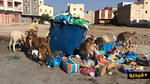 استمرار انتشار الازبال بأحياء مدينة الناظور وشوارعها ينذر بكارثة بيئية تهدد صحة المواطنين
