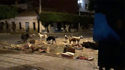 كارثة تتكرر كل أسبوع.. بائعو الخضر يحولون الشارع الرئيسي بسلوان لكومة أزبال والسلطات في سبات عميق