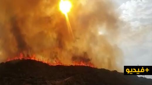 شاهدوا.. ألسنة النيران تواصل التهام مساحات شاسعة من الغطاء الغابوي بتفرسيت