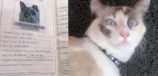 شابة ناظورية تعرض مكافأة مالية لفائدة من يعثر على قطتها المفقودة