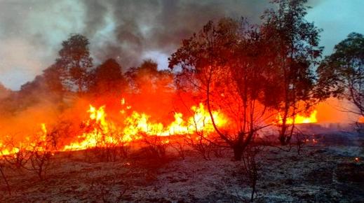 حقوقيون  بالناظور: حريق تافريست أتى على أزيد من ألف هكتار ويجب تصنيفه جريمة بيئية وفتح تحقيق