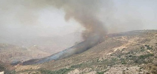 بعد 7 ايام من إشتعاله.. ارتفاع المساحة المتضررة من حريق غابة عشاشة إلى 470 هكتارا