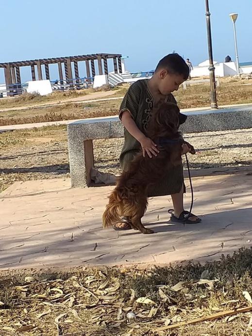 سيدة من بني أنصار تبلغ الشرطة عن تعرض كلبها للسرقة على يد رجل مجهول وتناشد إرجاعه