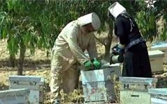 تعاونية نسائية لتربية النحل