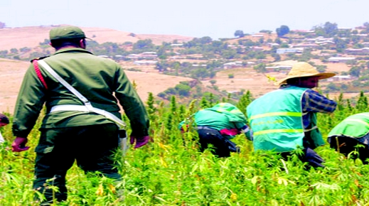 تبادل إطـلاق النار بين مزارعين للكيف يتسبب في حالة استنفار أمني قصوى بين الحسيمة والشاون