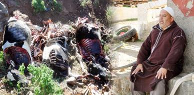 نفوق 9 رؤوس من الأبقار بإحدى المزارع بجماعة إيكسان يدق ناقوس الخطر وسط غياب حس المسؤولية لدى الجهات المعنية