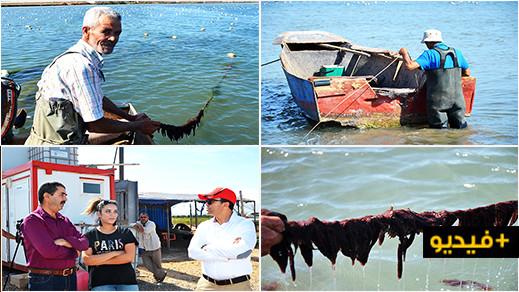 الوكالة الوطنية لتنمية الأحياء البحرية تطلع على كيفية تربية الطحالب بالمزرعة النمودجية ببوعرك