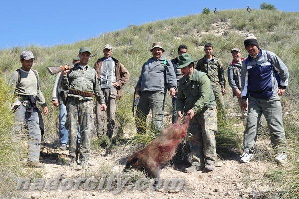 ناظور سيتي ترصد في ربورطاج مصور بمنطقة زايو العمل الميداني لإدارة المياه والغابات بخصوص صيد الخنزير البري
