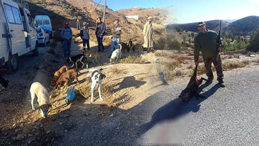 جمعية الصداقة للقنص وحماية البيئة والتنمية تقوم بإحاشة الخنزير البري