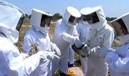 تجربة تربية النحل بمنطقة متليلي