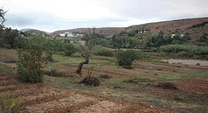 فلاحون بالريف لناظورسيتي: تأخر المطر بدأ يؤثر على الزراعات البعلية