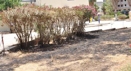 عامل ببلدية زايو يتسبب في حرق جزء من صغير من الحديقة العمومية عن غير قصد