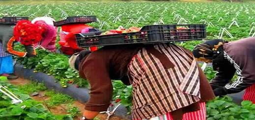 كورونا يمدد عقود العاملات المغربيات بإسبانيا ويعيد انتشارهن