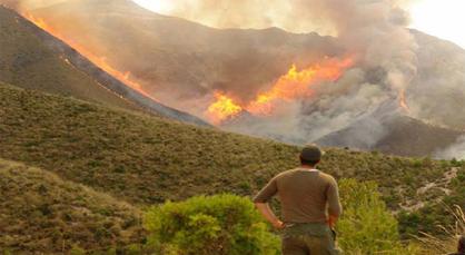 حريق بطنجة يأتي على حوالي 14 هكتارا من الغابة بالجماعة القروية دار الشاوي
