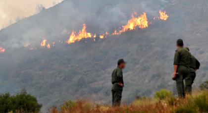 صورة من حريق غابة كبدانة