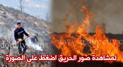وفاة عنصر من القوات المساعدة في حادث حريق غابة كبدانة وتدخل 220 عنصرا أمنيا