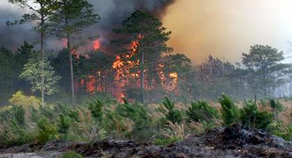 حريق يأتي على حوالي هكتار بغابة ويوان بخنيفرة