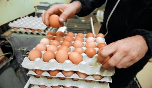 منتجو البيض  يتكبّدون خسائر بمئات الملايين يوميا ومهنيون يؤكدون أن القطاع مهدد بالانهيار