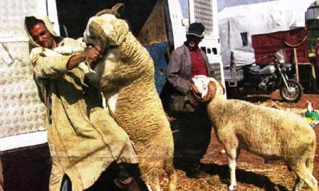 الحكومة تطمئن المواطنين حول توفر السوق لاكباش العيد