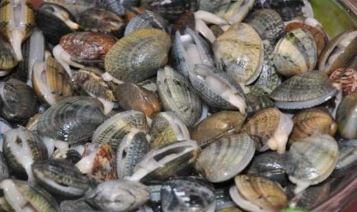 مواد سامة تمنع جمع الصدفيات بالمتطقة البحرية رأس كبدانة